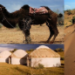 ラクダにゆられて砂漠紀行