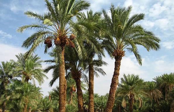 palm-goglet-ir1